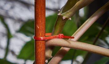 Подвязка растений кабельными стяжками